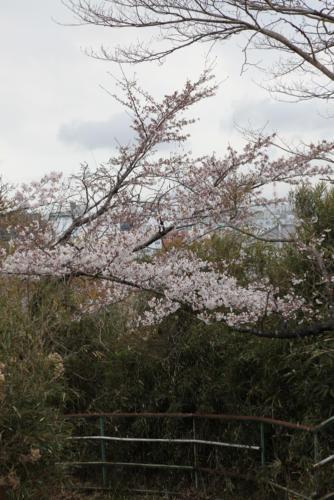 富ヶ浦公園電飾工事2019年度