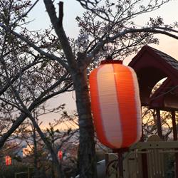 2018年度 いわき市富ヶ浦公園花見電飾工事